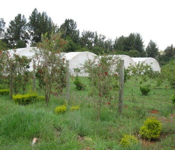 Ampath Project, Eldoret