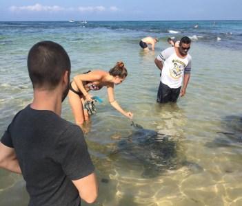 sea turtels