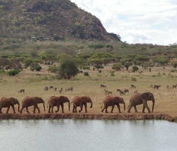 Voi Elephants