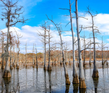 Black Bayou Lake in Monroe, Louisiana, USA