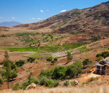 Rice fields Andringitra National Park Madagascar Africa