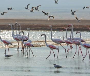Salt Lakes Birds