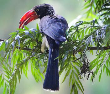 Bird watching and nature walk
