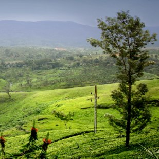 Scenic Hill Country Nuwara Eliya - The Little England