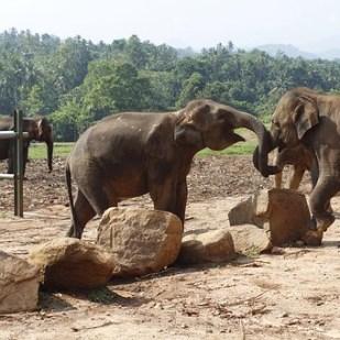 Enjoy amazing views and the natural wonders of Sri Lanka