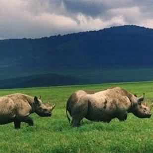 Why Safari in Tanzania????