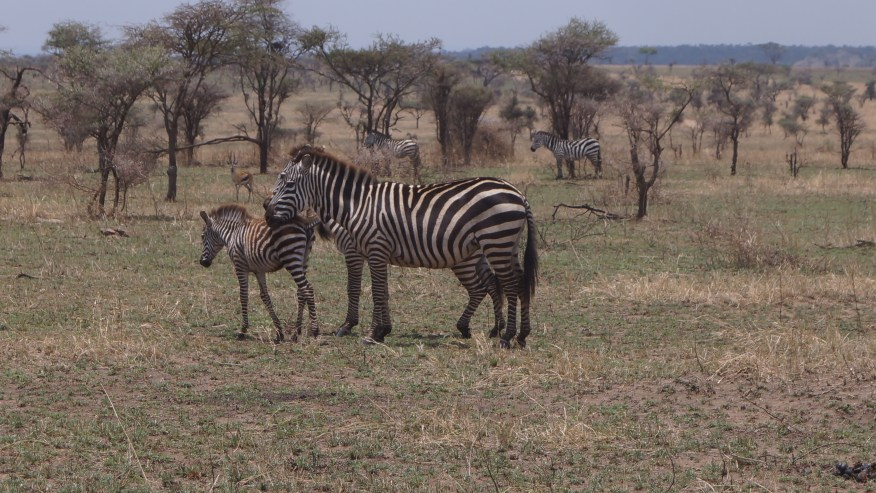 Tented Camp Safari - Fun Unlimited