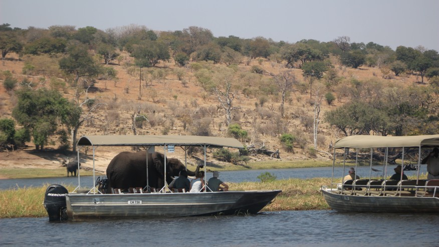 Game Viewing from the Boat