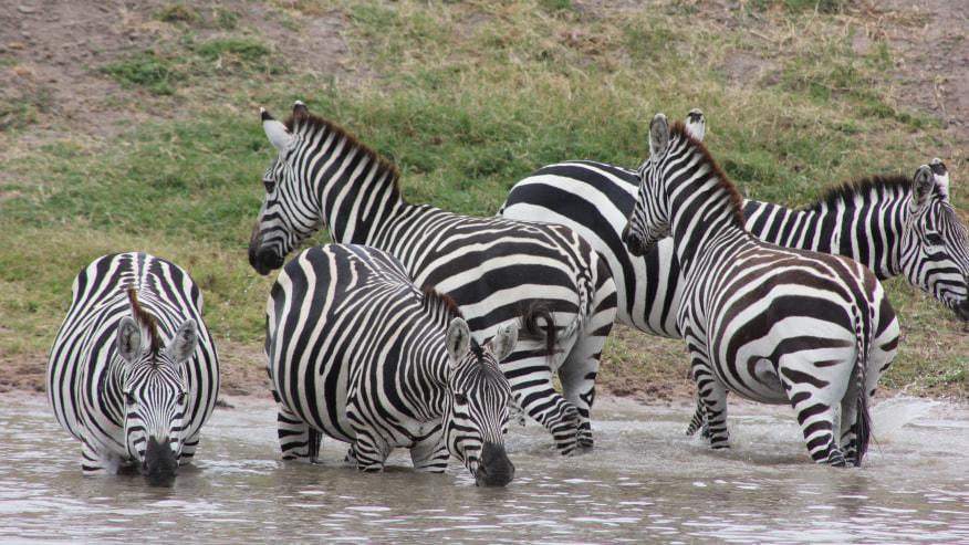 4 Days 3 Nights Safari in Serengeti
