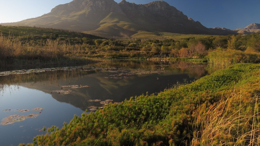 Helderberg Nature Reserve - Botanical Excursion