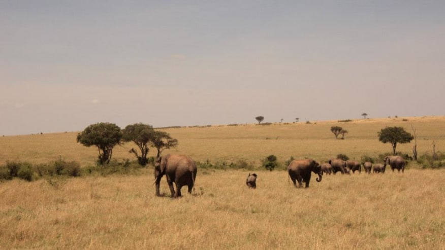 Enrol in this Bargain African Safari