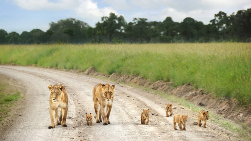 Experience Raw Nature in Kenya