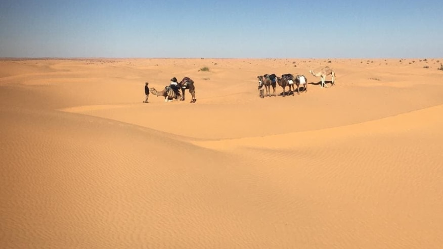 camels and their handlers