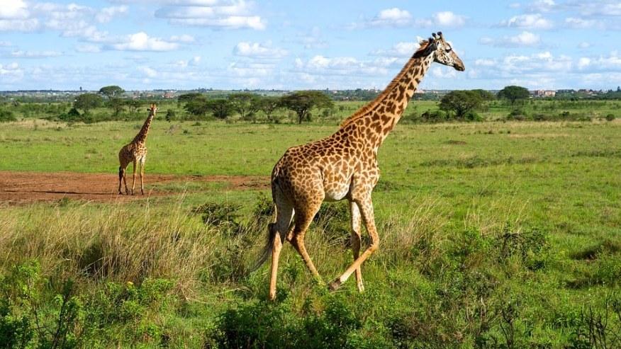 Go for Lodge Safaris in Nature
