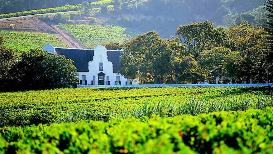 Spend a Day in the Cape Wine lands
