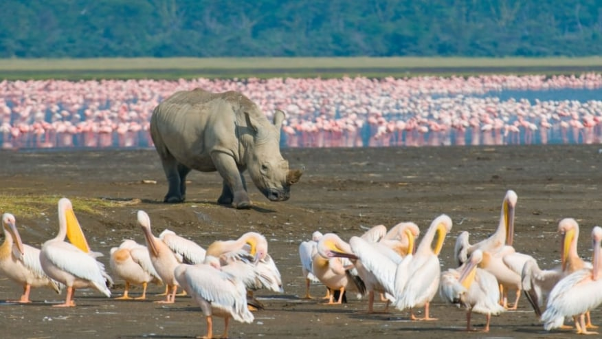 flamingos, rhino and birds by the lake