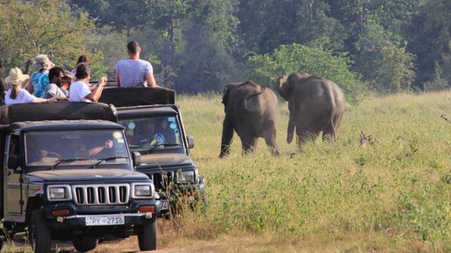 spot elephants in Kaudulla