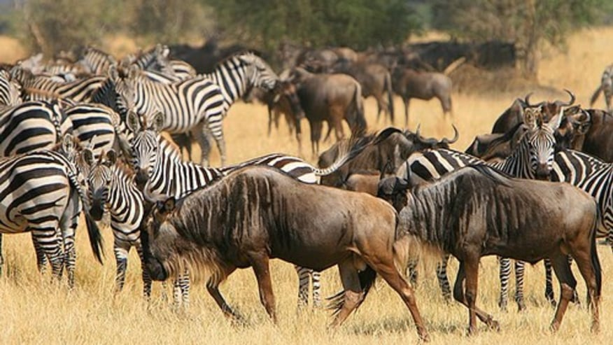 Seek the wild affair at Kenyan Game Reserve