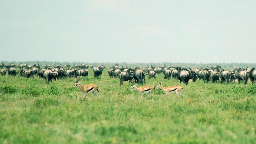 wildlife encounter