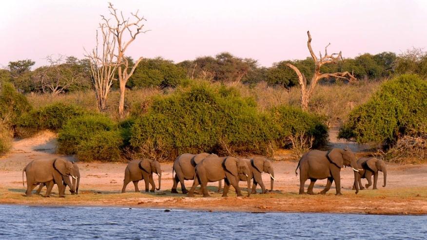 Elephant sighting in Chobe NP