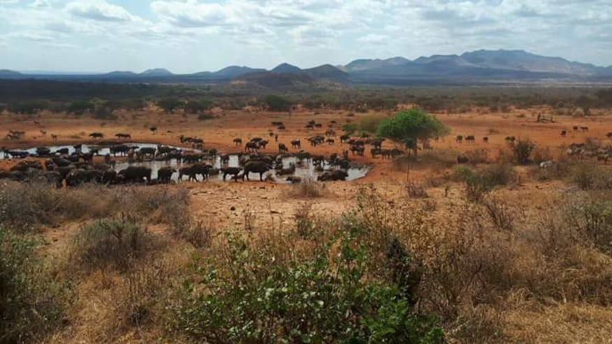 Elephants & buffaos at watering point