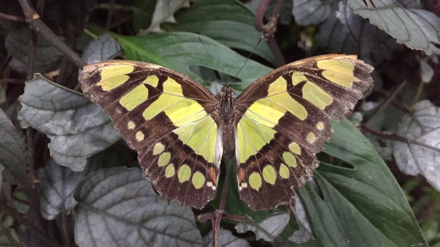Capture the scenic Cloud Forest and Butterfly Farm