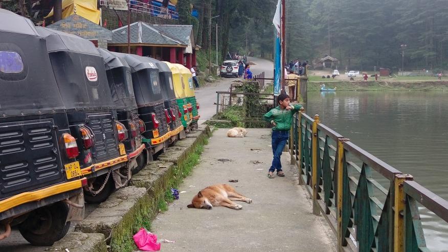 Sightsee Dharamsala