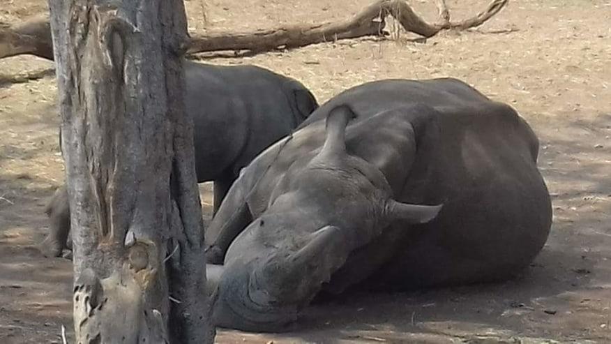 Go on Rhino Walks here