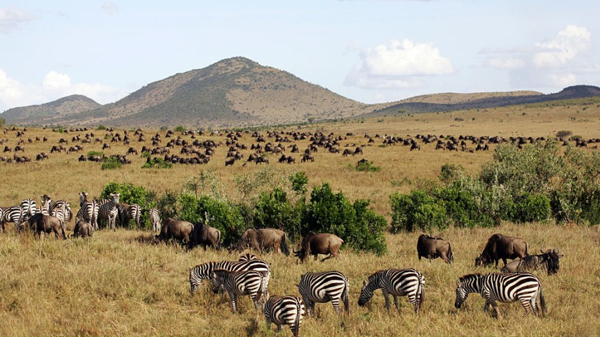 Explore the famous National Parks of Kenya