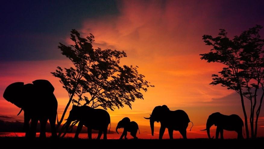 Walk in the lap of wildlife!