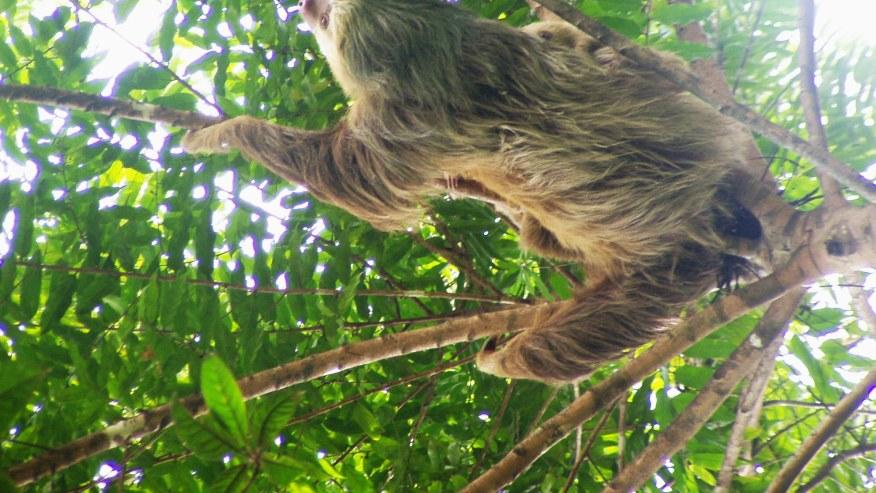Observe the fauna in Nicaragua