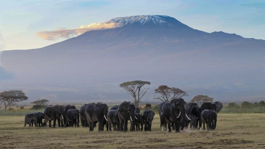 elephant herd with Kilimanjaro background