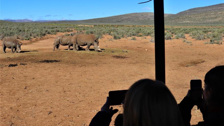 spot African rhinos