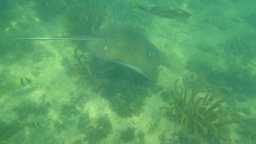 Holbox Sting Ray
