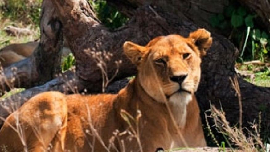 Masai Mara and More...