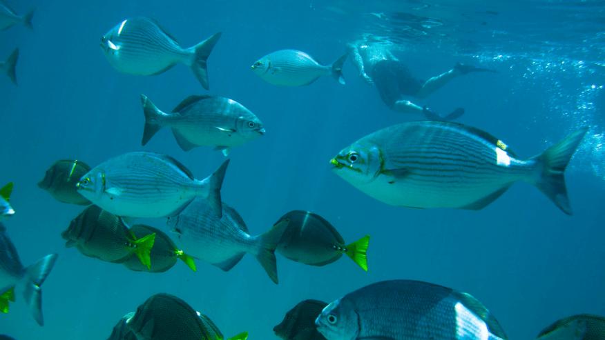 swim with sub-tropical marine life
