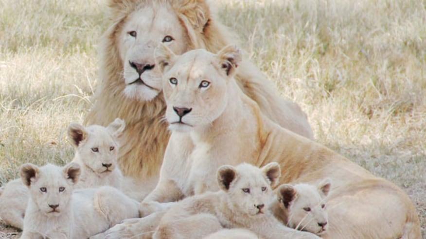 Explore Kingdom of Wild