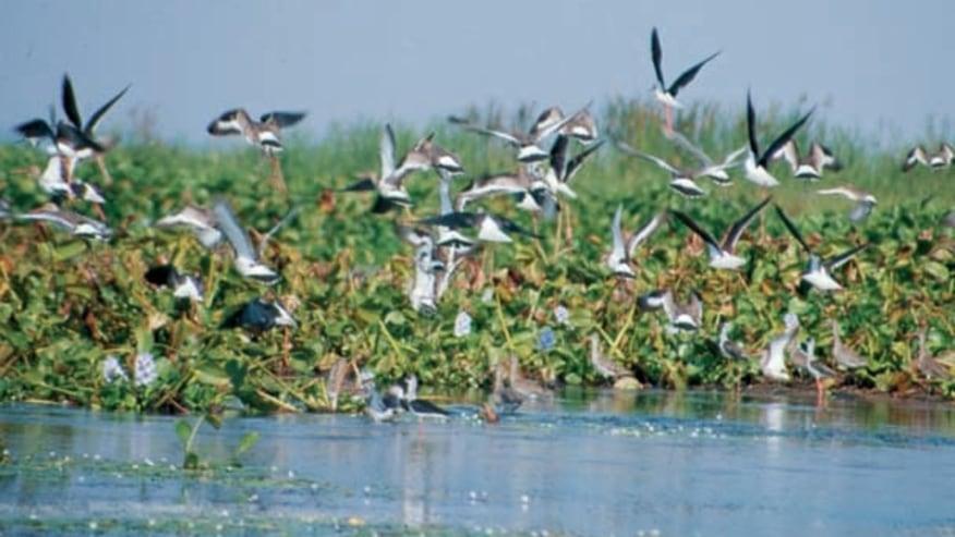 Lake in Bhopal