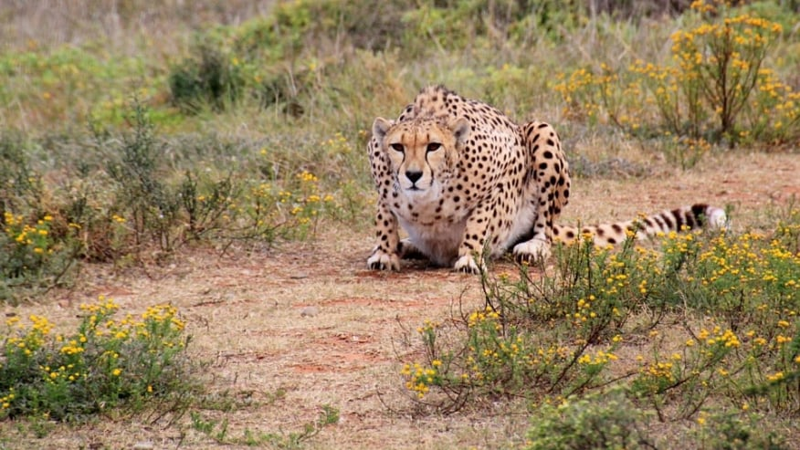 Go for Wildlife Safari in South Africa