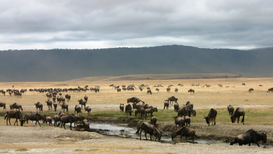 Discover the Best of Tanzanian Northern Circuit Wildlife