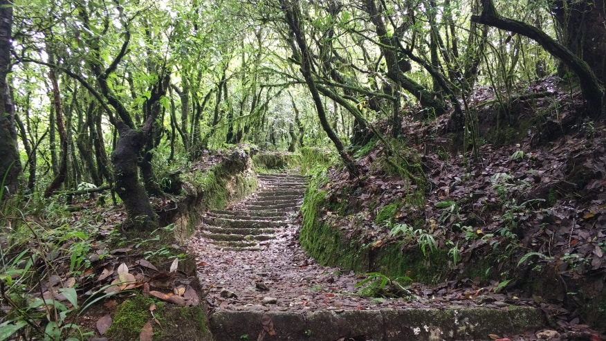 The nature hewn steps