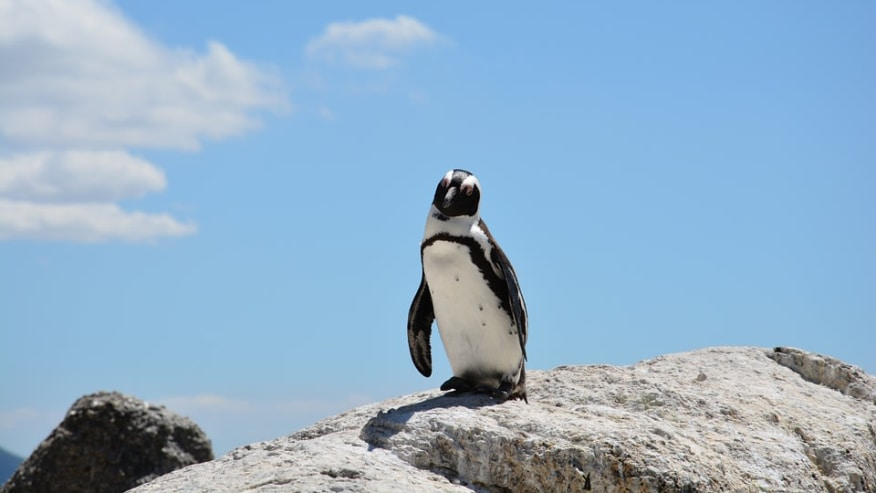 Meet the penguins of Patagonia