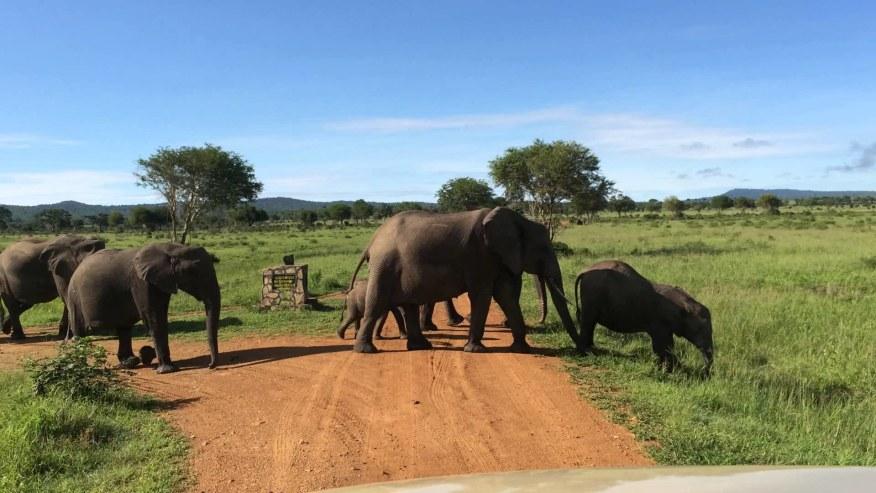 elephants on the way