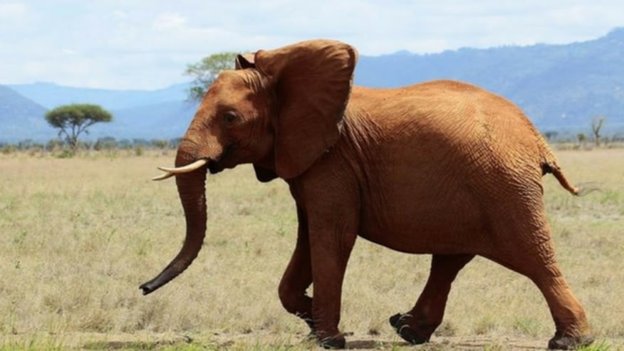 Browse the south Kenyan wilderness