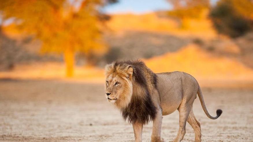 Enjoy seeing exotic wildlife