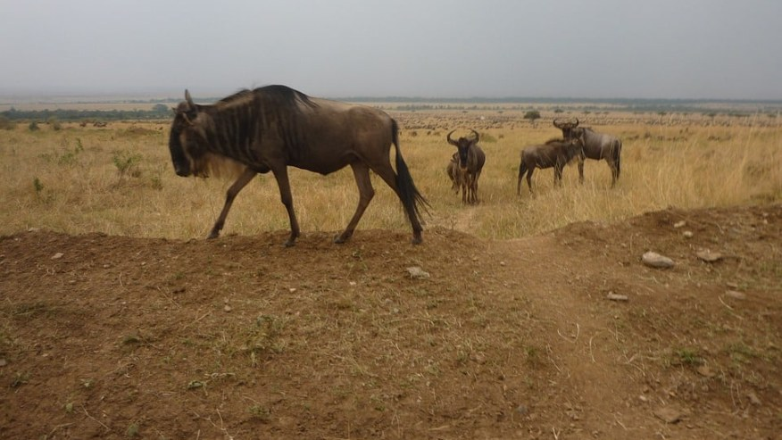 View African Wildlife in their Natural Habitats!