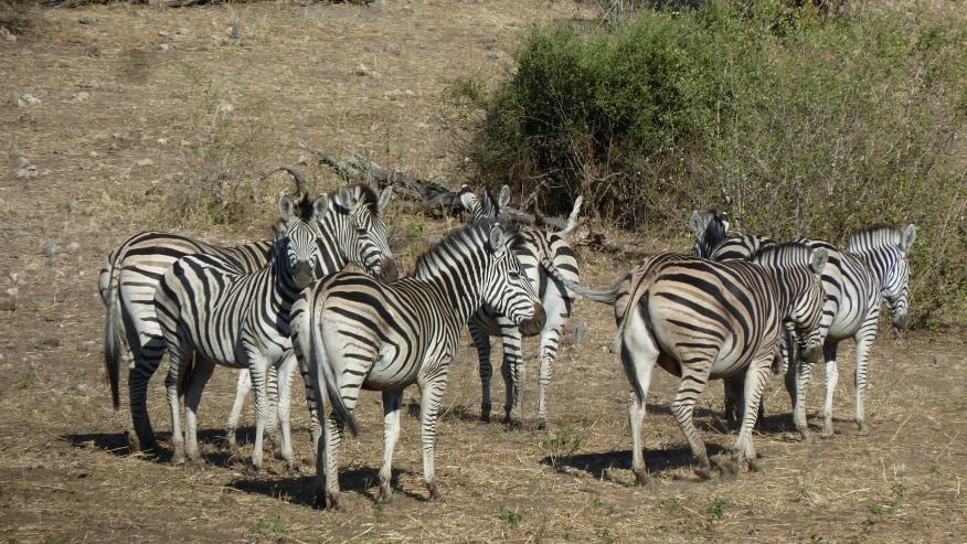 Venture into the sprawling Okavango Delta & Salt Pans