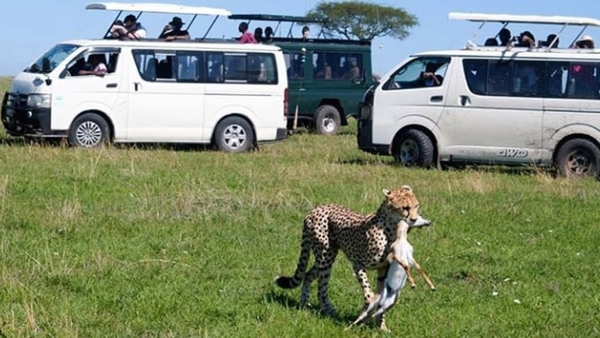 Go on a Solo Vacation to Wildlife Safari