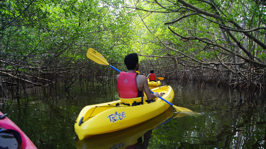 Go Kayaking in Piñones State Forest