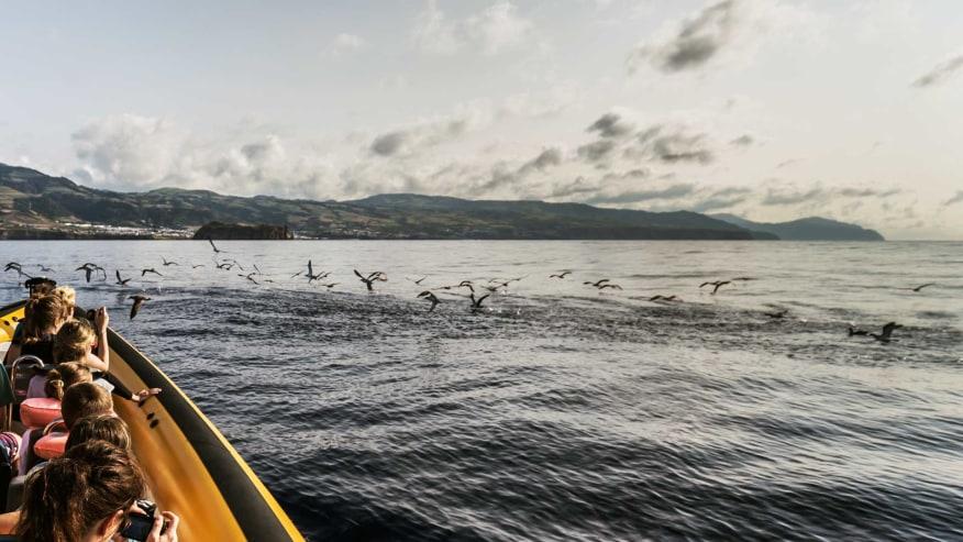 Marine Birdwatching